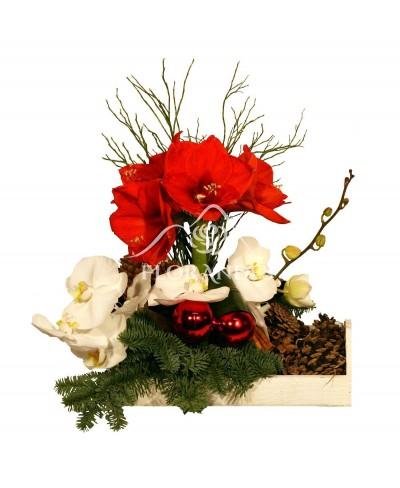 Aranjament floral de iarna cu amaryllis