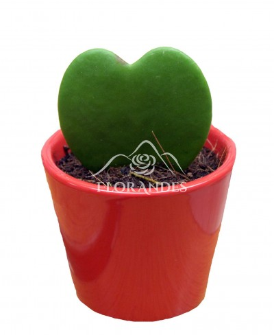 Valentine Hoya