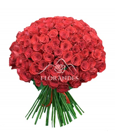 Buchet 101 trandafiri rosii 60 cm