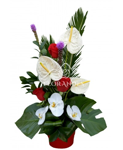 Aranjament floral exotic anthurium