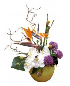 Aranjament floral orhidee si strelitzia