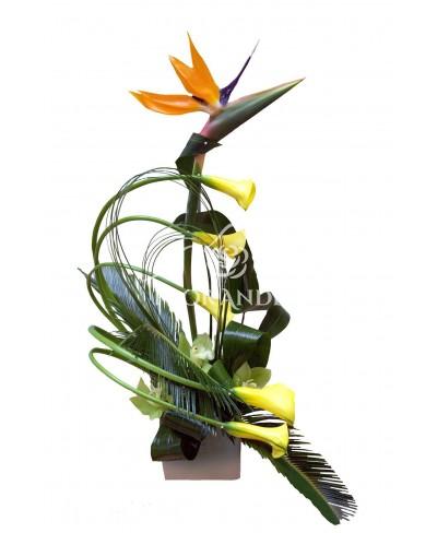Aranjament floral strelitzia si cale galbene