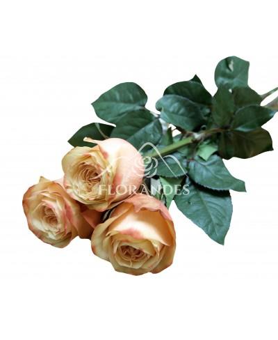 Trandafiri Kahala