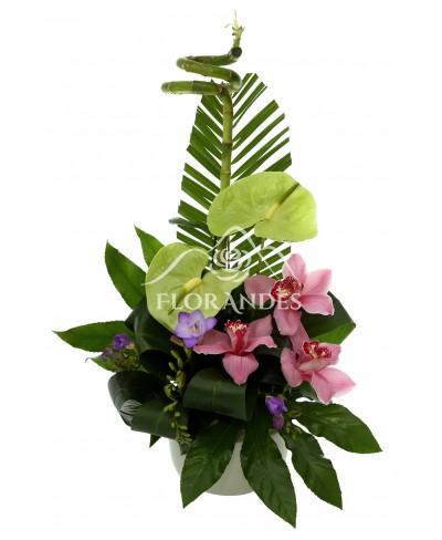 Aranjament floral orhidee si anthurium
