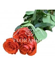 Trandafiri Nina