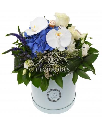 Cutie cu hortensie albastra si orhidee