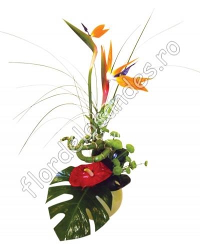 Aranjament floral strelitzia si bambus