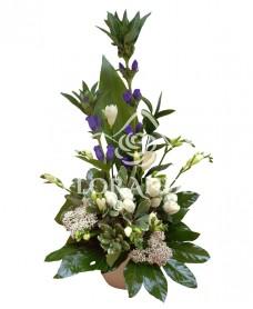Aranjament floral minitrandafiri si frezii