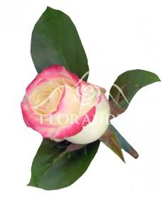 Cocarda din trandafir Sweetness