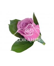 Cocarda din trandafri ciclam