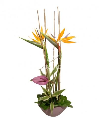 Aranjament floral cu strelitzia