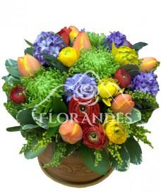 Aranjament floral lalele si ranunculus