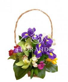 Cosulet orhidee si irisi