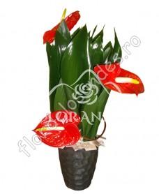 Aranjament floral exotic anthurium