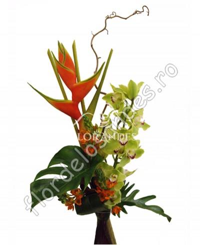 Buchet exotic orhidee