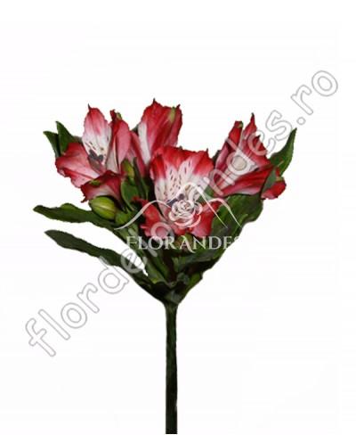 Alstroemeria rosie