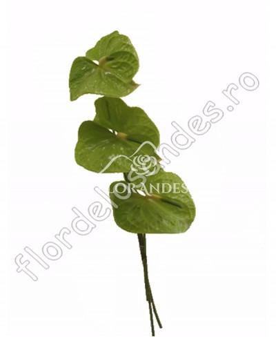 Anthurium verde
