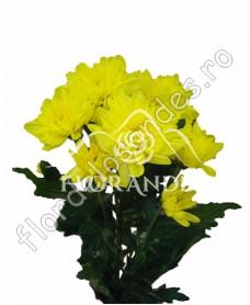 Crizantema galbena