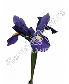 Iris mov
