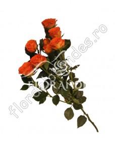 Minitrandafiri portocalii