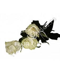 Trandafiri albi Mondial