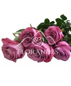 Trandafiri mov Moody Blue