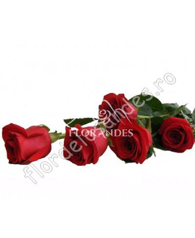 Trandafiri rosii Freedom