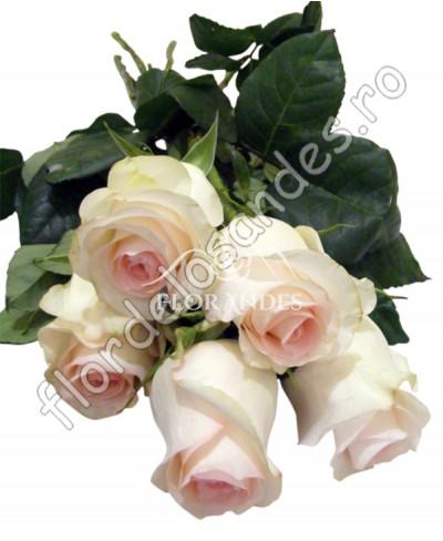 Trandafiri roz Senorita