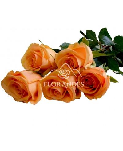 Trandafiri somon Versilia