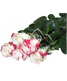 Trandafiri Sweetness