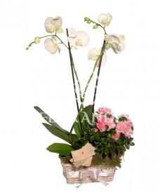 Aranjament floral cu azalee