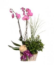 Aranjament floral cu orhidee ciclam