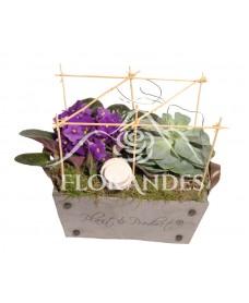 Aranjament floral cu saintpaulia