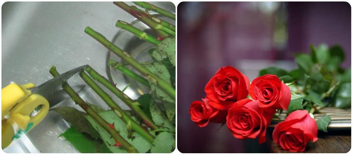Cum facem ca trandafirii sa reziste mai mult