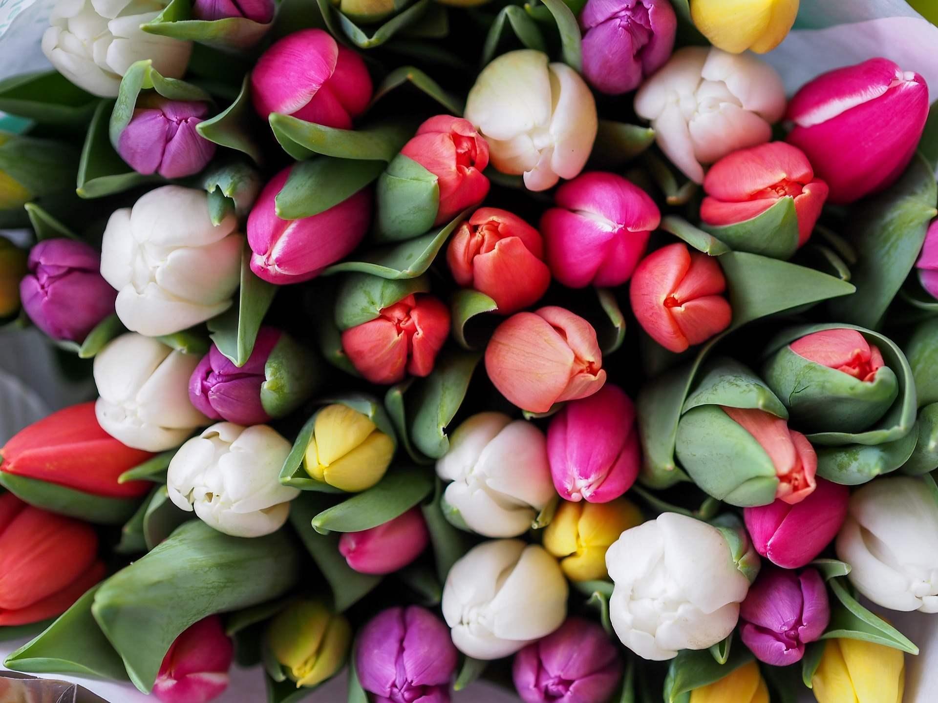 Flori de primavara, pentru 1 si 8 Martie