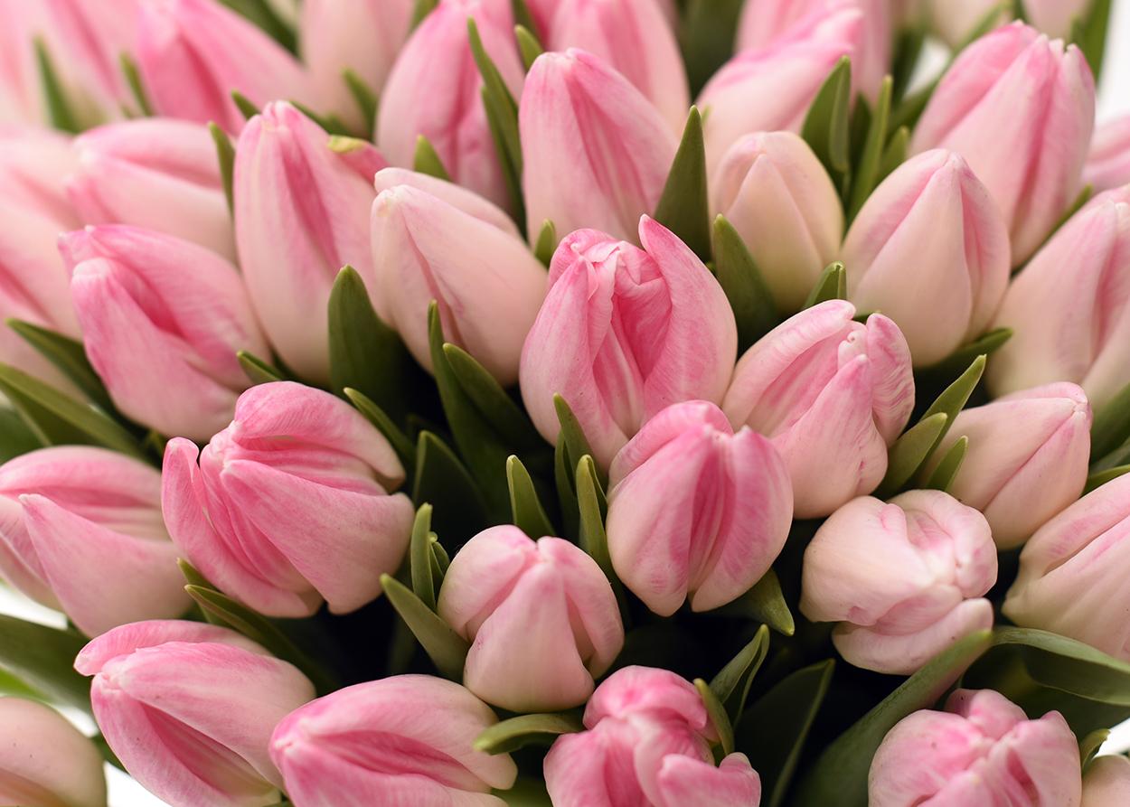 Comanda online flori de primavara