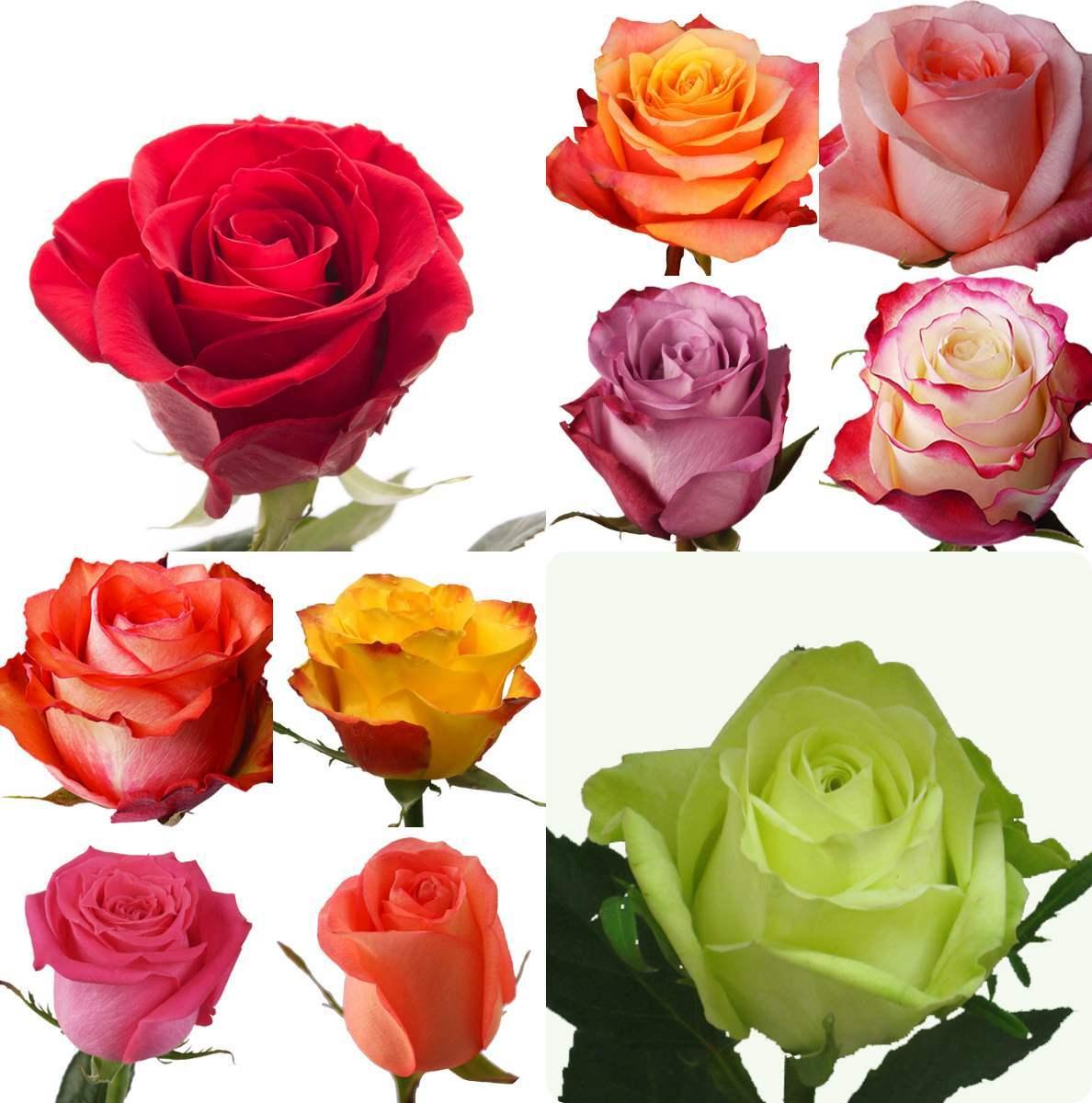 Trandafirii de Ecuador, o adevarata marca in domeniu
