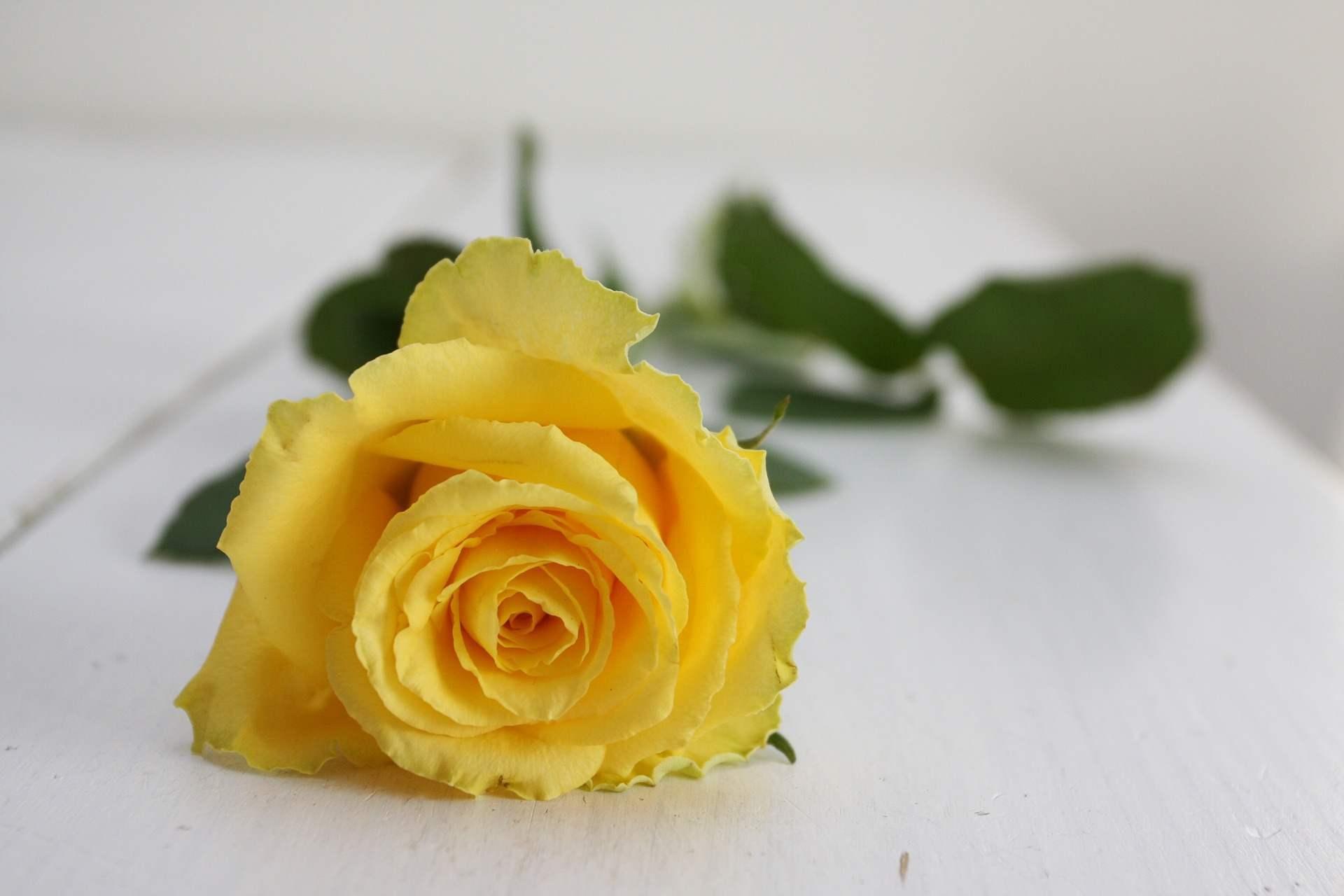 Buchetele de trandafiri galbeni - optimism si vitalitate