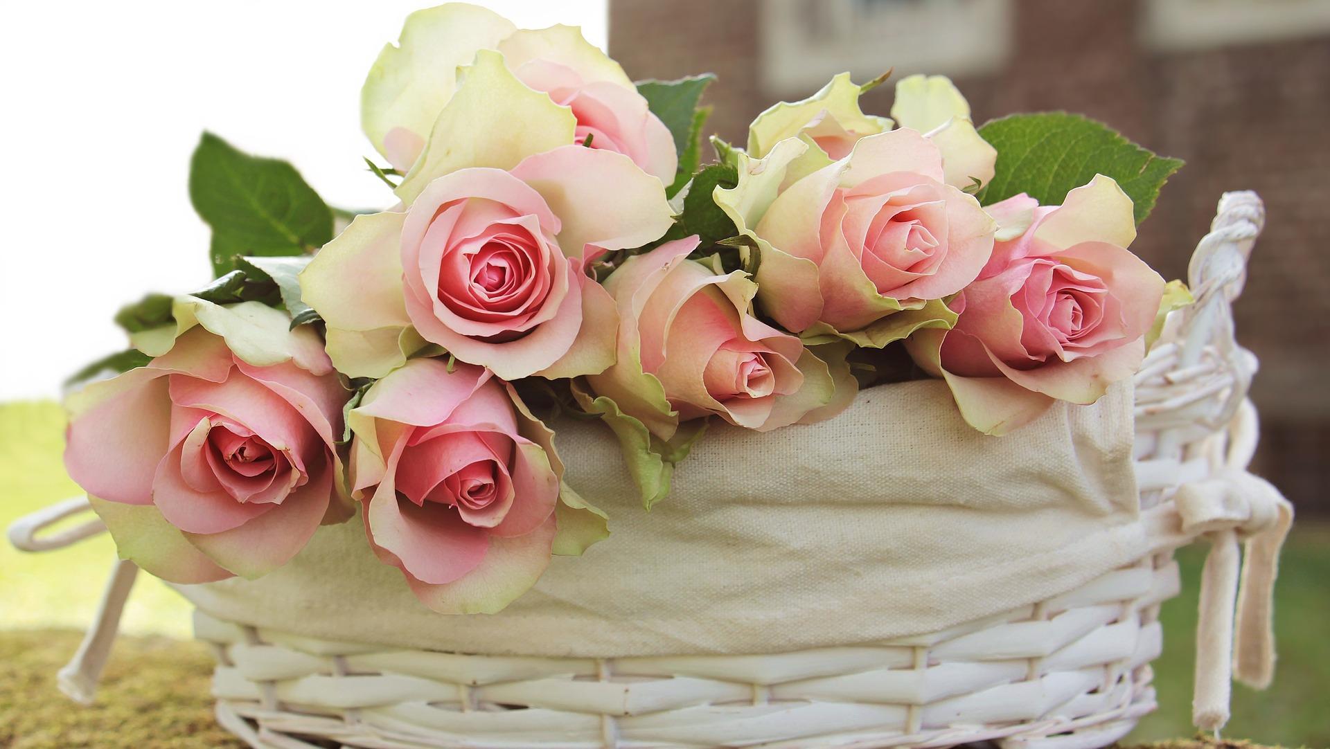 Buchetele de trandafiri roz, gratie si rafinament