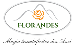 Florarie online Bucuresti – Florandes.ro